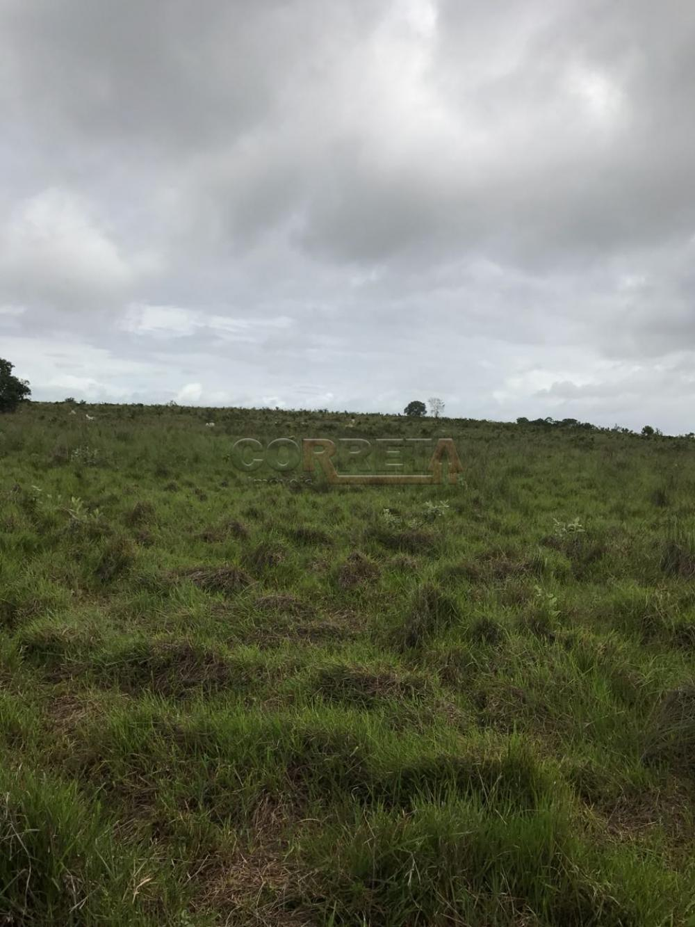 Comprar Rural / Fazenda em Rondonópolis - Foto 5