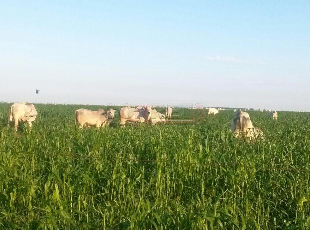Comprar Rural / Fazenda em Ivinhema - Foto 5