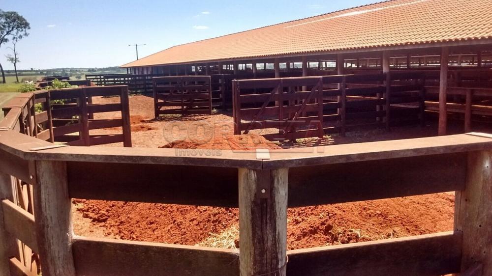 Comprar Rural / Fazenda em Ivinhema - Foto 18