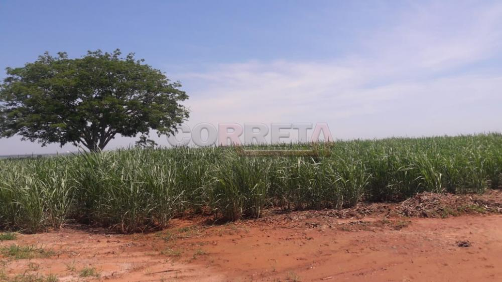 Comprar Rural / Fazenda em Araçatuba - Foto 10