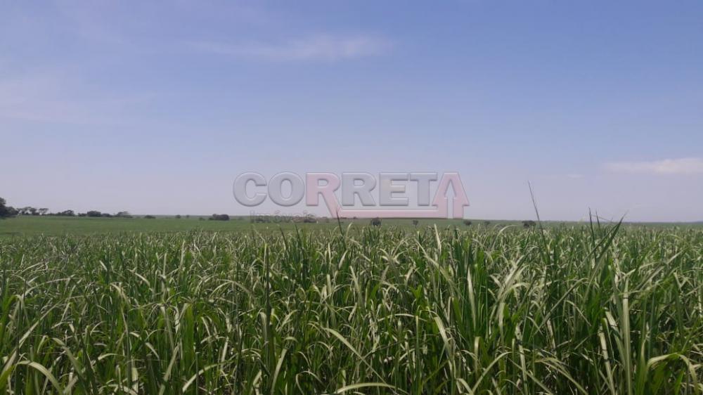 Comprar Rural / Fazenda em Araçatuba - Foto 11