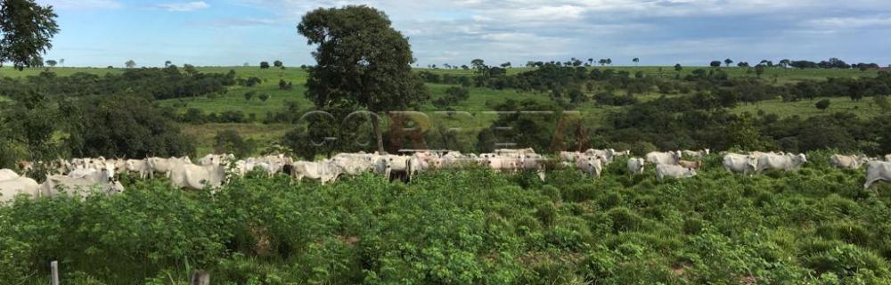 Comprar Rural / Fazenda em São José do Rio Preto - Foto 5
