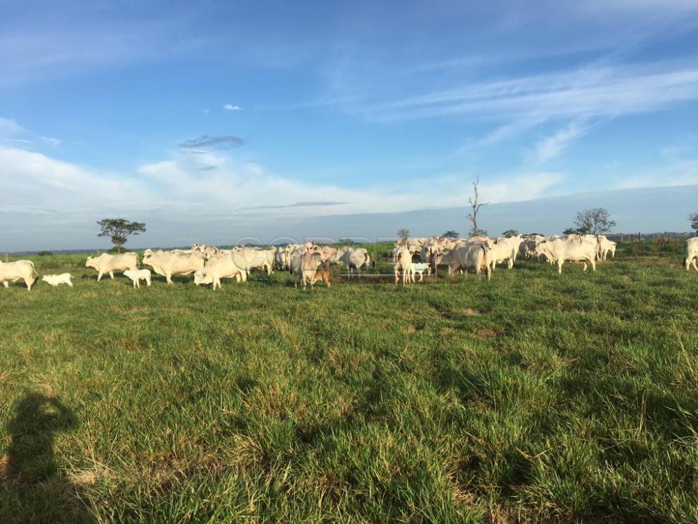 Comprar Rural / Fazenda em São José do Rio Preto - Foto 1