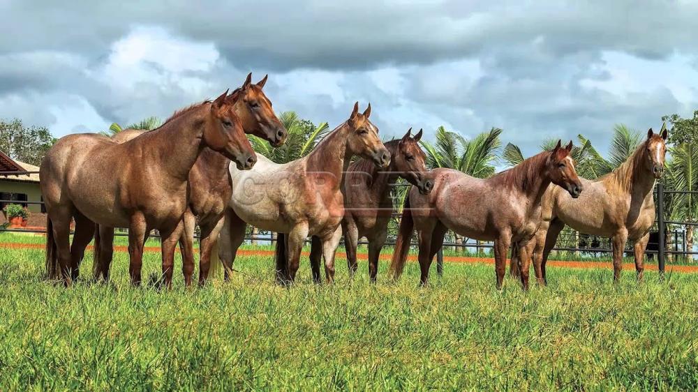 Comprar Rural / Sítio em Araçatuba - Foto 1