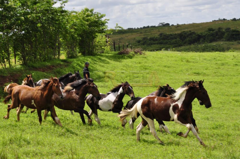 Comprar Rural / Sítio em Araçatuba - Foto 3