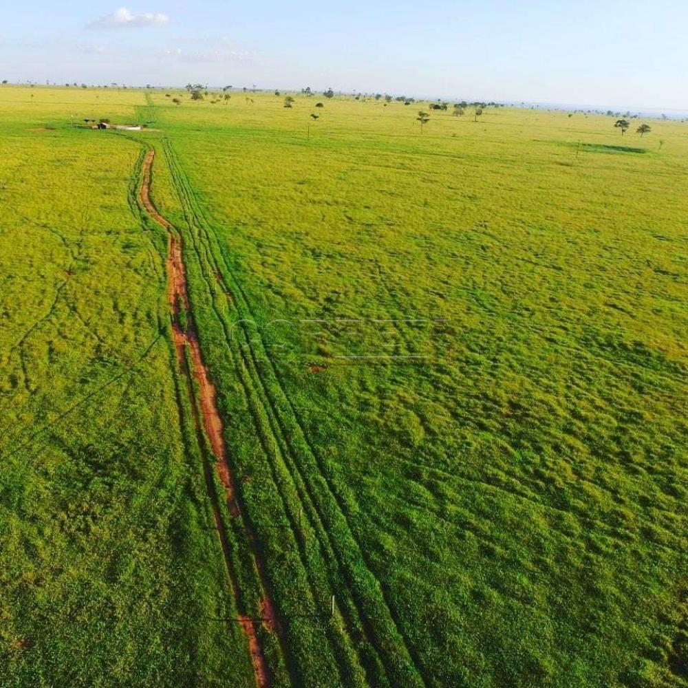 Comprar Rural / Fazenda em Presidente Prudente - Foto 3