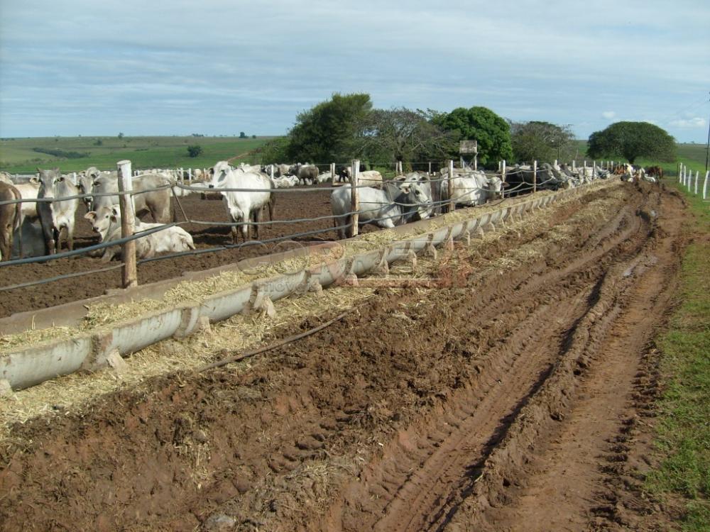 Comprar Rural / Fazenda em Assis - Foto 1