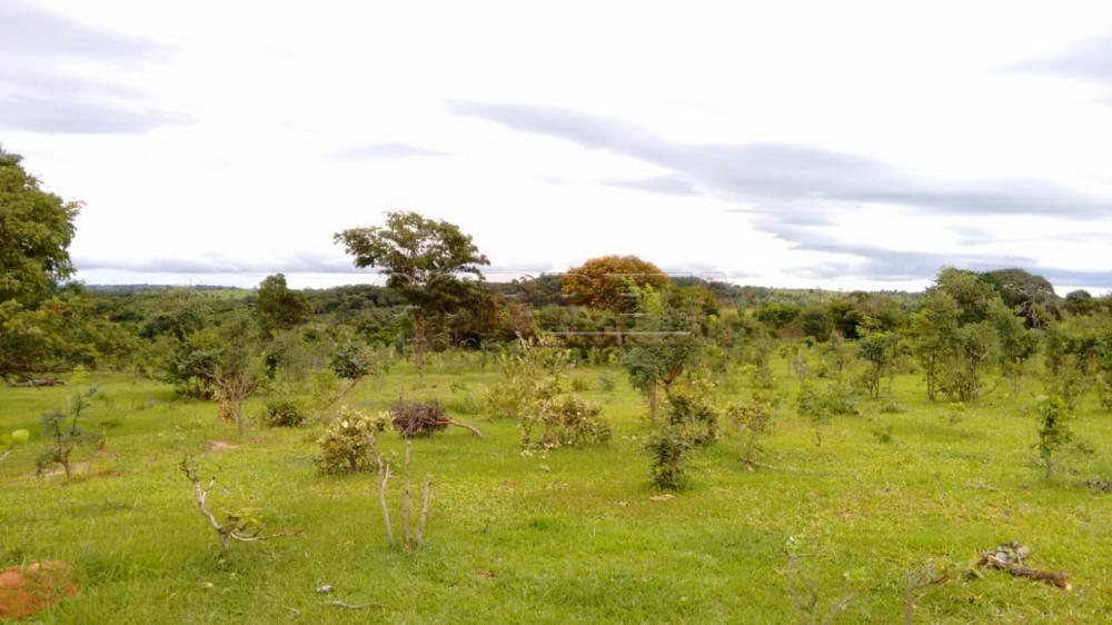 Comprar Rural / Fazenda em Três Lagoas - Foto 3
