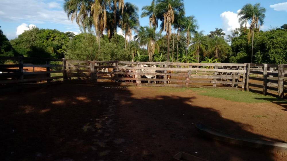 Comprar Rural / Fazenda em Três Lagoas - Foto 4
