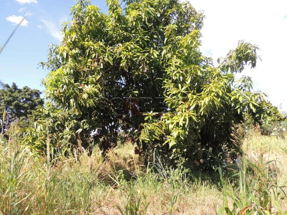 Comprar Terreno / Padrão em Buritama apenas R$ 100.000,00 - Foto 1