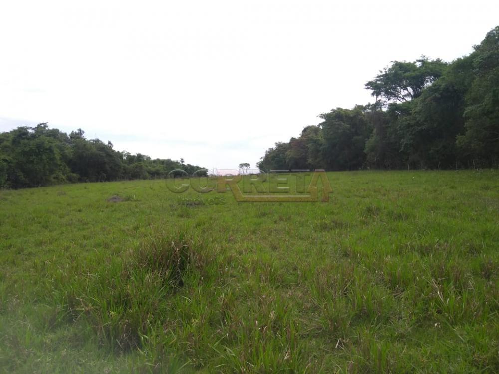 Comprar Rural / Sítio em Coroados apenas R$ 930.000,00 - Foto 21