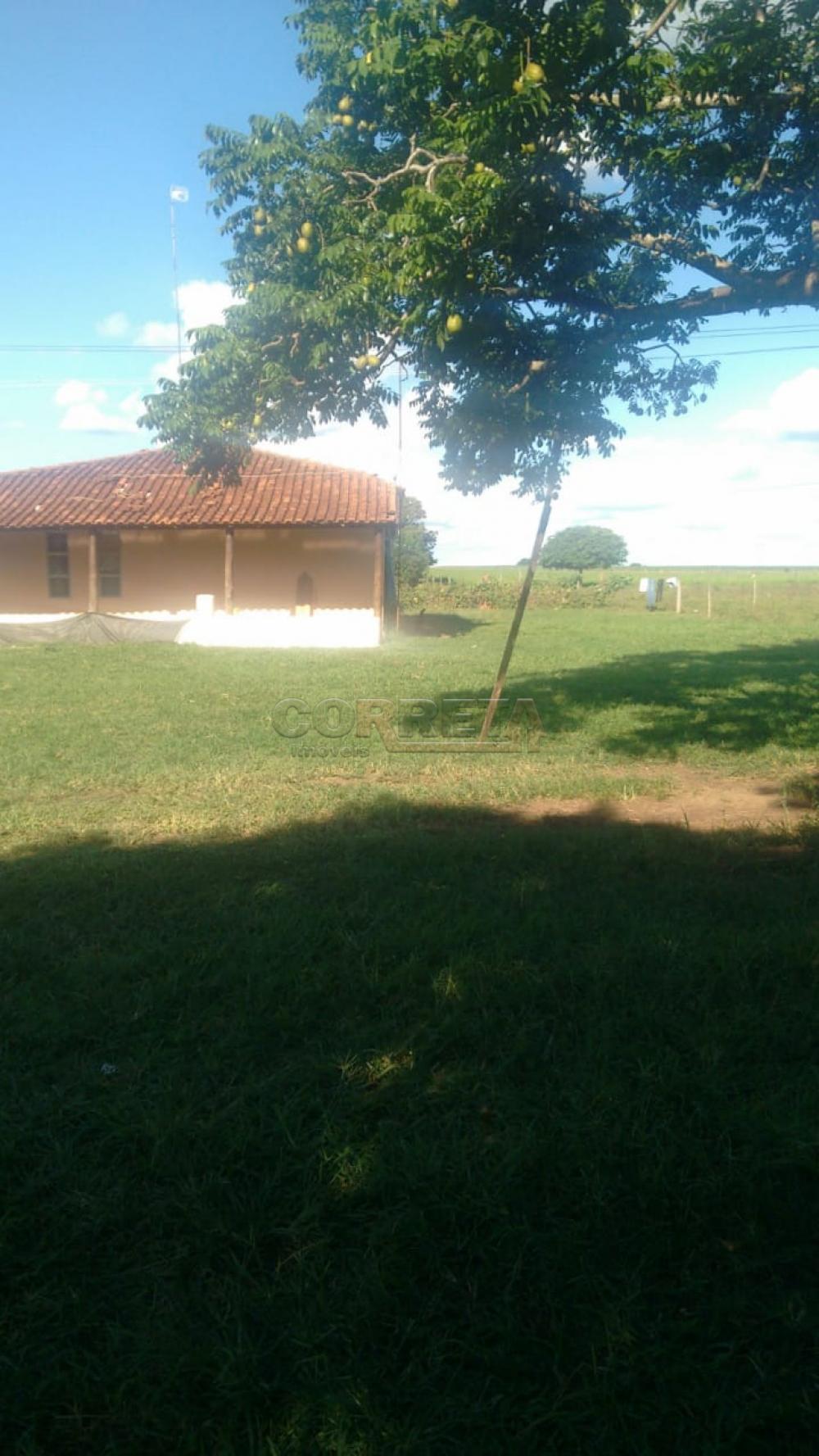 Comprar Rural / Sítio em Coroados apenas R$ 930.000,00 - Foto 2