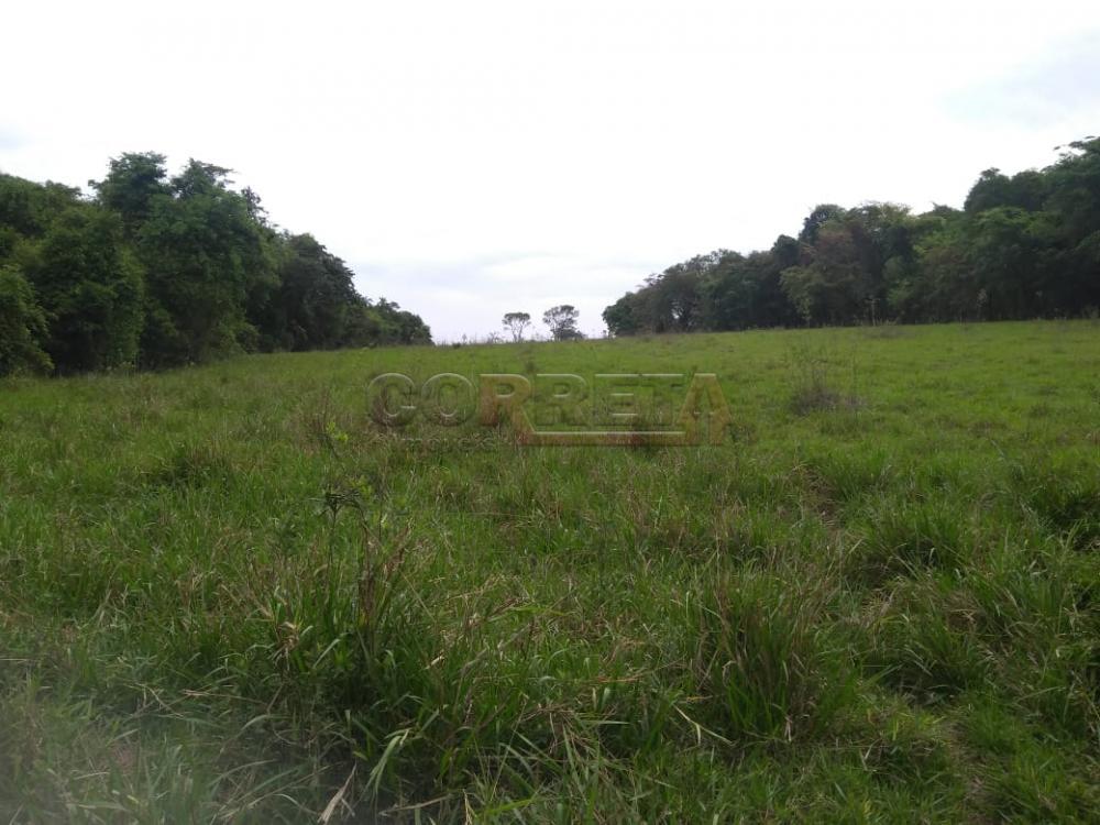 Comprar Rural / Sítio em Coroados apenas R$ 930.000,00 - Foto 17