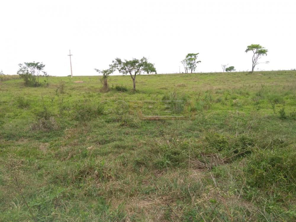 Comprar Rural / Sítio em Coroados apenas R$ 930.000,00 - Foto 20