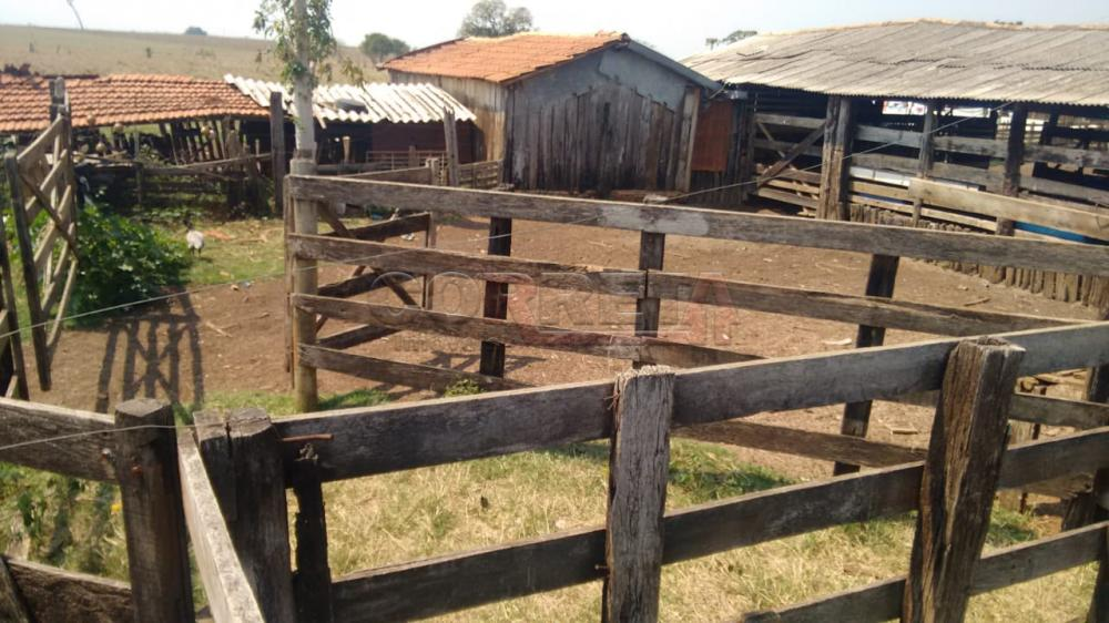 Comprar Rural / Sítio em Coroados apenas R$ 930.000,00 - Foto 7