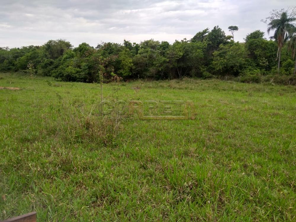 Comprar Rural / Sítio em Coroados apenas R$ 930.000,00 - Foto 35