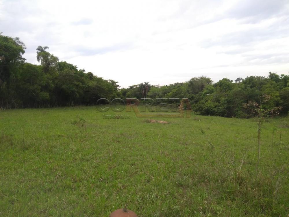 Comprar Rural / Sítio em Coroados apenas R$ 930.000,00 - Foto 36