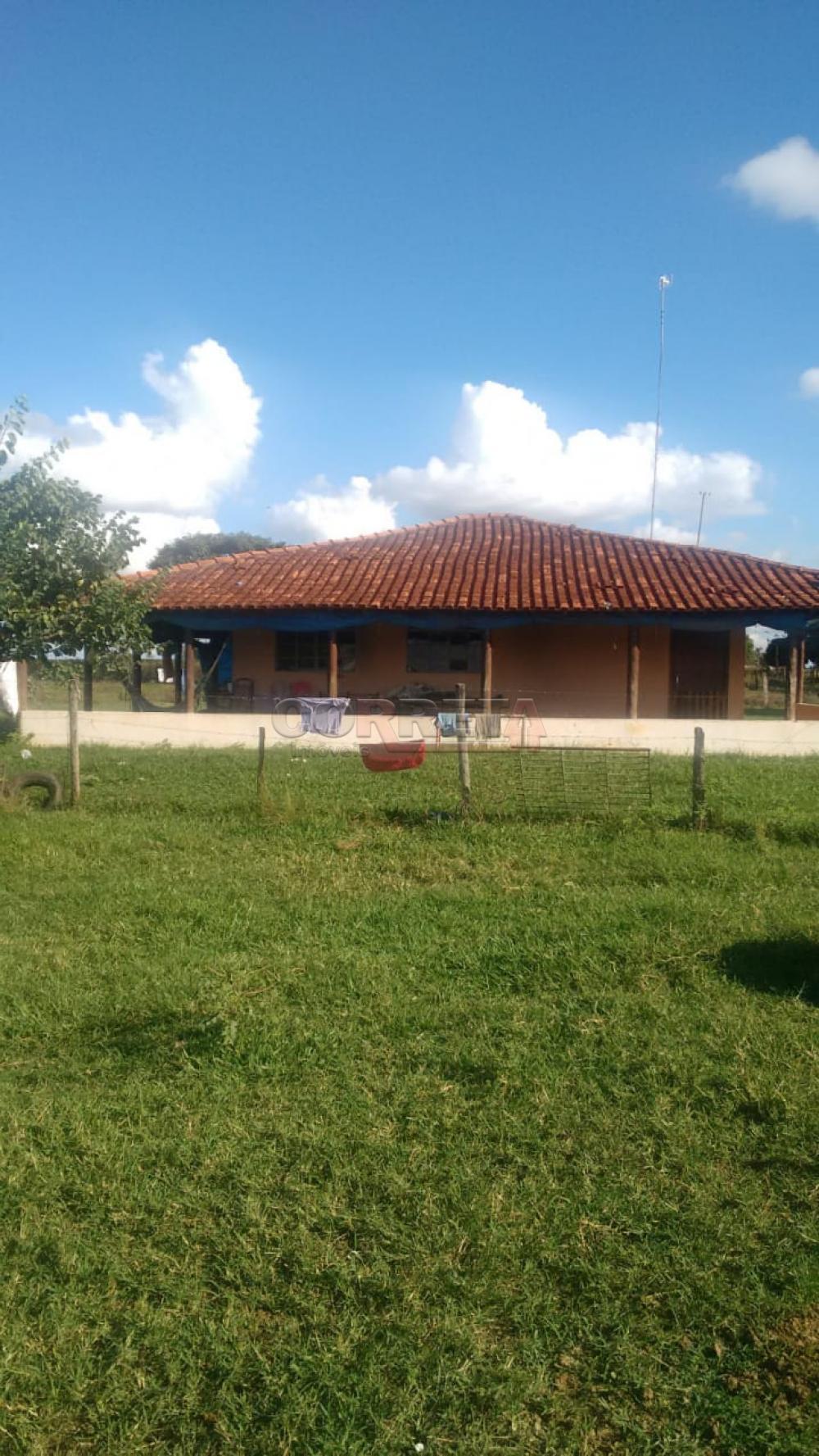 Comprar Rural / Sítio em Coroados apenas R$ 930.000,00 - Foto 3