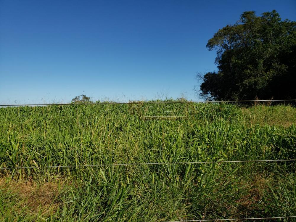 Comprar Rural / Fazenda em Cassilândia - Foto 4
