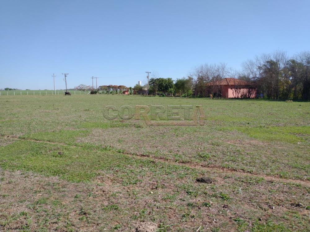 Comprar Rural / Rancho em Santo Antônio do Aracanguá apenas R$ 1.470.000,00 - Foto 7
