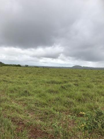 Comprar Rural / Fazenda em Rondonópolis - Foto 6