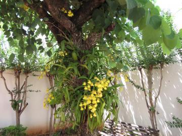 Comprar Casa / Padrão em Araçatuba apenas R$ 1.300.000,00 - Foto 48