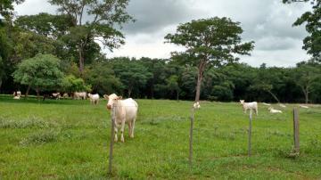Comprar Rural / Fazenda em Água Clara - Foto 8