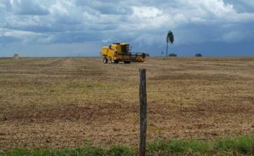 Comprar Rural / Fazenda em Ivinhema - Foto 2
