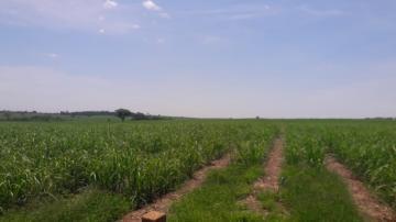Comprar Rural / Fazenda em Araçatuba - Foto 7