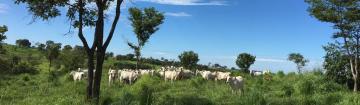 Comprar Rural / Fazenda em São José do Rio Preto - Foto 2