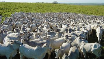 Comprar Rural / Fazenda em Presidente Prudente - Foto 4
