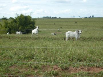 Comprar Rural / Fazenda em Assis - Foto 4