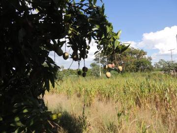 Comprar Terreno / Padrão em Buritama apenas R$ 100.000,00 - Foto 3