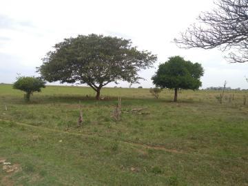 Comprar Rural / Sítio em Coroados apenas R$ 930.000,00 - Foto 23