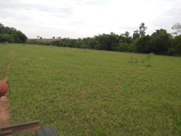 Comprar Rural / Sítio em Coroados apenas R$ 930.000,00 - Foto 18