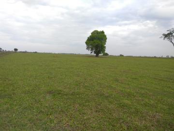 Comprar Rural / Sítio em Coroados apenas R$ 930.000,00 - Foto 19