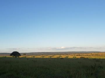 Comprar Rural / Fazenda em Cassilândia - Foto 3