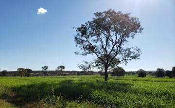 Comprar Rural / Fazenda em Cassilândia - Foto 2