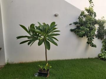 Comprar Casa / Residencial em Araçatuba R$ 250.000,00 - Foto 10